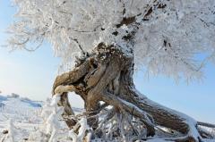 """一场""""冰雪奇缘""""即将上演 带给你不一样的冬季狂欢新体验"""